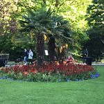 Beautiful palm trees in St Stephens Green.