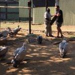 Hoedspruit Endangered Species Centre Foto