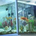 Аквариум с золотыми рыбками тоже создаёт правильную атмосферу
