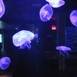 Foto de Biodome de Montreal
