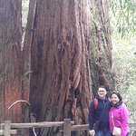 One of the giant redwood trees at the Muir Woods Park