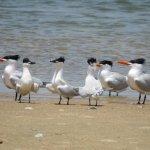 Bird dance anybody?
