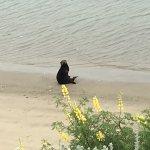 Sea Otter and Moss Landing; Elkhorn slough