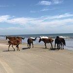 Photo de Carova Beach