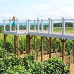 """Unique to any tasting room in Michigan, take a stroll on the """"Bridge Above the Vines"""""""