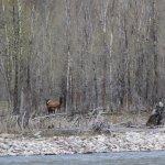 Elks in hiding
