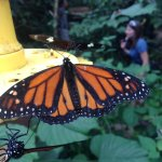 Photo of Butterfly Conservatory