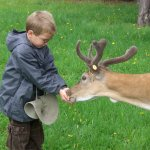 Black Pine Deer Farm, where you can see and feed the deer.