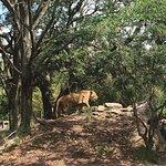 Jacksonville Zoo & Gardens