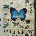 Vienna Schmetterling Haus - variety guide