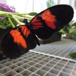 Vienna Schmetterling Haus