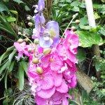 Vienna Schmetterling Haus - exotic plants