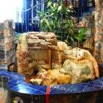 Museum Hundertwasser - foyer fountain