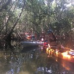 This was in the midst of the mangroves