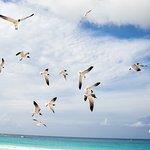 Photo de Flamenco Beach
