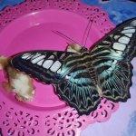 Butterfly House Varna