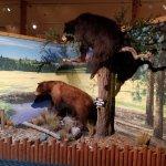 One of several scenes; Wildlife Museum