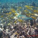 Photo de 100 Degrees East Dive Team