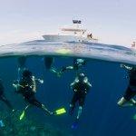 Photo of TGI Diving International - Roatan Henry Morgan