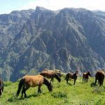 Horses in the Colca Canyon