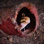 Photo of Froggies Divers Lembeh