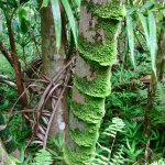 Amazing moss!