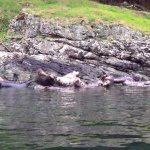 Wildlife Tour - harbour seals