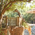 Giraffe feeding area