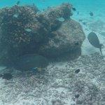 Underwater reef photo under our villa.