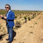 100 year old bobal vines