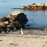 Photo de Stony Point Penguin Colony