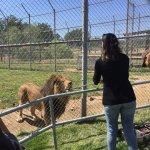 Feeding a Lion