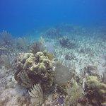 Foto de Pro Dive International