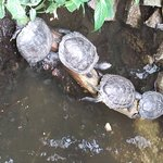 Turtles in the tropical house.