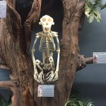 Photo de Museum of Osteology