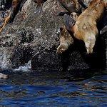 Sea lions in Resurrection Bay