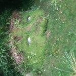 Foto di The Lost Gardens of Heligan
