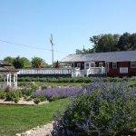 White Oak Lavender Farm & The Purple WOLF Vineyard ภาพถ่าย