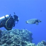 Diving with green turtle
