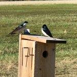 Photo de Creamer's Field Migratory Waterfowl Refuge