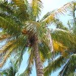 Gotta luv a palm view