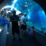 Maui Ocean Center Foto
