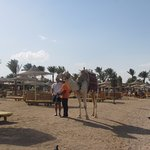 Foto di Desert Rose Resort