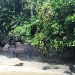 Foto de Praia do Félix