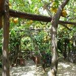 Photo of I Giardini di Cataldo