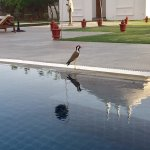 A fury friend in the pool area