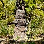 Foto de Sherwood Forest