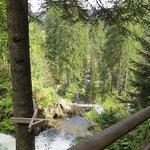 Photo of Triberger Waterfall