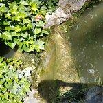 Estanques verdes, mal cuidados, con muy poca agua.....