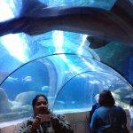 Big shark lying on the glass canopy